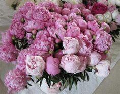 Peonies - Fresh Flower Farm