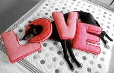 ~ Greyhound Love ~
