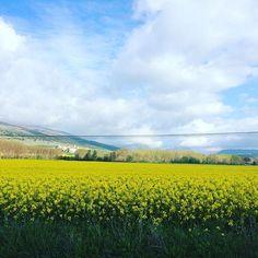 Bonitos paisajes los que nos regala la primavera en #Navarra... (By @crisbarberena - #Instagram)