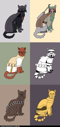 Star Wars cats lol i know someone thay would find tis absolutly halarious and cuit at the same time lol