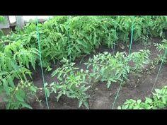 Mdr Garten, Kraut, Garden, Travel, Youtube, Agriculture, Plant, Mint, Nature