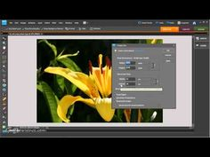 Photoshop Elements for Beginners - Resizing for the web