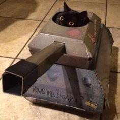 Já pensou em dar um avião ou tanque de guerra para seu gato? Veja como - 24/01/2017 - UOL Estilo de vida
