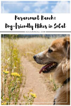 Los Angeles Things to Do | Southern California Hikes | Dog-Friendly Hikes…