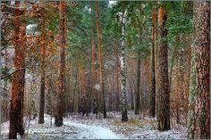 Парк Серебряный бор - Фотография - Пейзажи