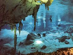 Scuba Dive Cenote Dos Ojos Playa Del Carmen Tulum Riviera Maya Mexico Come and experience the most amazing scuba diving of your life. These Cenotes / Caverns / Caves are found all over the Riviera Maya, near Playa Del Carmen and Tulum Cozumel Mexico, Cave Diving, Scuba Diving, Tulum, México Riviera Maya, Location Villa, Excursion, Quintana Roo, Underwater World