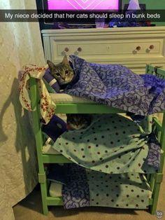 ✿⊱❥ Ehhh beliche para gatos... lol