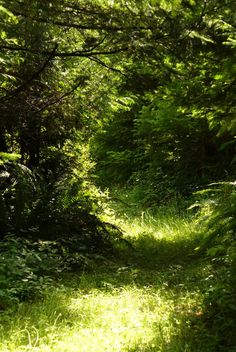 Secret Forest Path by *PamplemousseCeil on deviantART - Wald Forest Adventure, Adventure Kids, Adventure Quotes, Adventure Travel, Forest Path, Forest Scenery, Forest Road, Enchanted Wood, Forest Photography
