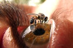 Bee on Eye Photo - Pretty Crazy Macro Shot - The Photography Network - PictureSocial