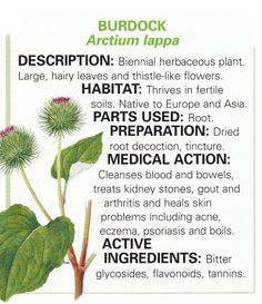 no. 4 burdock / san yaw ~ Burdock - just one of the ingredients in our organic 'Skin Glow' tea. Natural treatment for problem skin