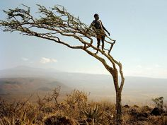 View from Above_ A member of the Hadza, a group of hunter-gatherers, can spot game from his porch on a wind-blown tree in Tanzania. Photograph by Martin Schoeller, National Geographic. Martin Schoeller, We Are The World, People Of The World, Hadza Tribe, Tribal Images, Picture Tree, Hunter Gatherer, African Tribes, National Geographic Photos