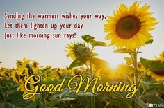 Good Morning Images Free Download Good Morning Images