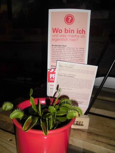 Beim veganen Kaffeeklatsch-Stammtisch im Pferdestall in Helmstedt