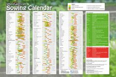 when2plant-406x609mm-uk Seed planting calendar sowing vegeteble herbs germination time distance planting