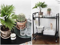 Forleden var jeg et smut forbi IKEA med Camilla Marie. Det var egentlig ikke meningen, at jeg skulle have noget med hjem, men da vi kom forbi planteafdelingen, kunne jeg ikke modstå denne fine palme-agtige sag. Planten har det mundrette navn Livistona Rotundifolia, men går også under navnet Dro....