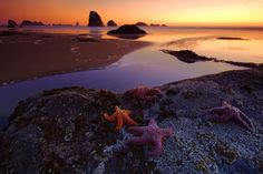 Starfish lay on rocks in Oregon in this National Geographic Your Shot Photo of the Day.