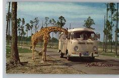 Giraffe and VW Camper van bus kombi in Africa.