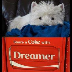Share a Coke with Dreamer❤❤