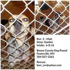 Fosterville, WV: M Bluetick named Gordon in Run 3 @ Boone County Dog Pound