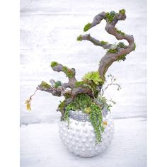 Succulents can grow anywhere, even on a branch! We are in love with this custom succulent arrangement! By Dalla Vita. #dallavita