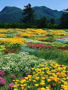 Kuju Flower Park, north west of Taketa Beautiful World, Beautiful Gardens, Beautiful Flowers, Beautiful Places, Amazing Places, Landscape Photos, Landscape Photography, Nature Photography, Nature Pictures