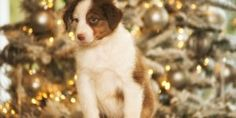 Das optimale Verhalten gegenüber dem Hund an Silvester und Vorsorge/Prophylaxe…