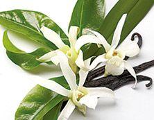 """""""Herkullista & mehevää"""" Brighter World Vanilja & tonkapapu Kietoudu herkullisen vaniljan lämpöön ja nauti häivähdyksestä Komoreiden auringonpaistetta. Tonkapavun tuoksu rentouttaa ja rauhoittaa."""