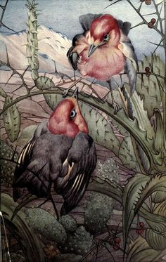 Edward Julius Detmold (1883 – 1957) - Espinas from 'News of spring and other nature studies' 1917