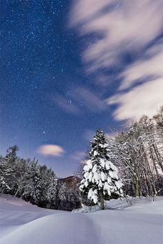 Stars Over Snow: A cold December 2011 evening in Tsugaikekogen, Nagano, Japan.