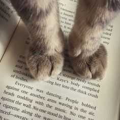 """longlore: """" When your cat decides you've read enough for today. """""""