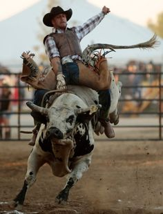 Not my first rodeo!