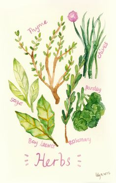 Herbs  Watercolor Painting Original by thelilyx on Etsy