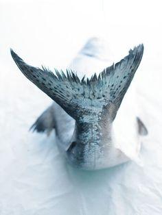 Macro / zoom photo of fish tail