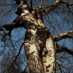 A woman gracefully being a tree