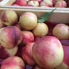 Arctic Jay White Nectarines found at cuesa :: Search by flavors, find similar varieties and discover new uses for ingredients @ preppings.com