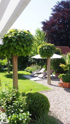 kugel trompetenbaum der sch nste baum f r den vorgarten outdoor pinterest gardens. Black Bedroom Furniture Sets. Home Design Ideas