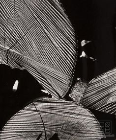 Martin Martinček  Composition Map Art, Black And White, Photography, Inline, Motifs, Folk Art, Composition, Stripes, Graphics
