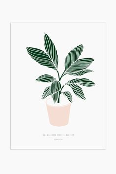Print on high quality paper, with smooth texture by tattoo sleeve Art Print - Chamaedorea ernesti-augusti Plant Illustration, Botanical Illustration, Graphic Design Illustration, Digital Illustration, Plant Painting, Plant Drawing, Plant Art, Foto Top, Plant Vector