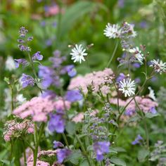 This pollinator-friendly combination of lychnis, nepeta and hairy chervil has a cottage garden charm to it🏡 Spring Garden, Magical Garden, Cottage Garden, Garden Shrubs, Charming Garden, Plant Combinations, Cottage Garden Plants, Shrubs, Thyme Garden