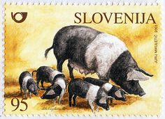 Slovenija.  FARM ANIMALS.  KRSKO POLJE PIG.  Scott 533 A229, Issued 2003 Sept 18, Perf. 14, /ldb.