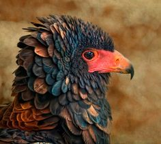 """Eagle"""" by Quim Granell"""