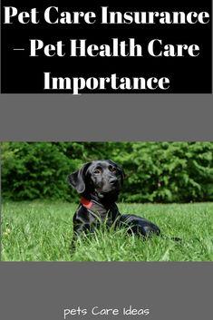Pet Care Insurance - Pet Health Care Importance - Pets Care Ideas Pet Health Insurance, Best Pet Insurance, Animal Shelter, Pet Shelter, Pet Care, Health Care, Pets, Animals, Animal Shelters