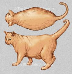 Check out Ohio State University's Body Condition Scoring Chart to get a visual representation of healthy weight and where your pet stands! Cats 101, Veterinary Medicine, Ohio State University, Cat Health, Beautiful Cats, Animal Rescue, Cat Lovers, Dog Cat, Gatos