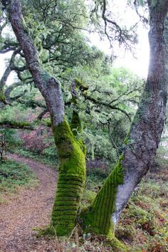 Land Art made in mousse. Tae Kitakata et Brittany Powell