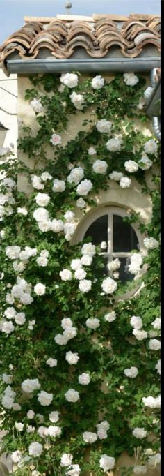 Love these white climbing roses. And the provencal roof! Garden Cottage, Rose Cottage, Moon Garden, Dream Garden, White Climbing Roses, Beautiful Gardens, Beautiful Flowers, Rare Flowers, Deco Nature
