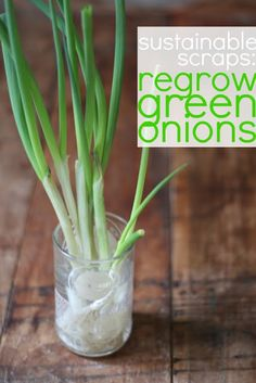 We are now growing green onions in our little apartment thanks to this handy guide - grow food scraps in small spaces!