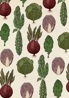 Katie Scott - Cabbages