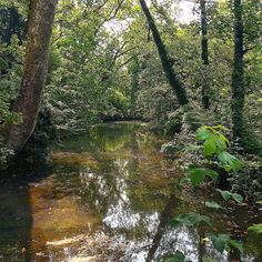 Giorno dalla foresta. Perdetevi cazzo é bellissssssssssimooooooooo. #run#morning #sun#iphone6s #love#sport#me#milano#italy#silent #dreamer #dream#freedom #work#tree#park#running#mind#mentality #lost#milanocity #milanodavedere #milanocityufficiale #hot#life#livefast#fuckyou by gior7278