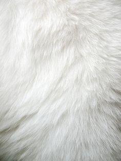 White fur.