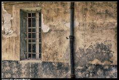 Uccellino - photographic processing (311) - elaborazione fotografica dell'immagine di un uccellino vicino ad un vecchio muro scrostato ...